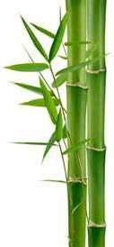 macfull blog bambu