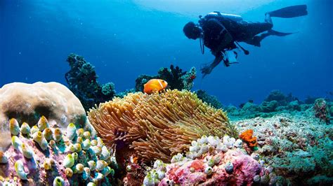 maldives dive best dives maldives diving excursions and luxury yacht