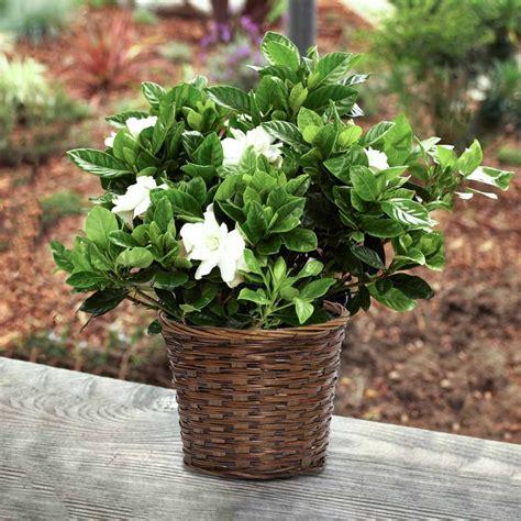 popular tropical plants indoor plant tips