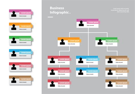 org chart designer color card organizational chart infographic