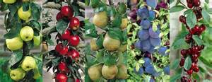 Miracle Grow Patio A Guide To Patio Fruit Trees Love The Garden