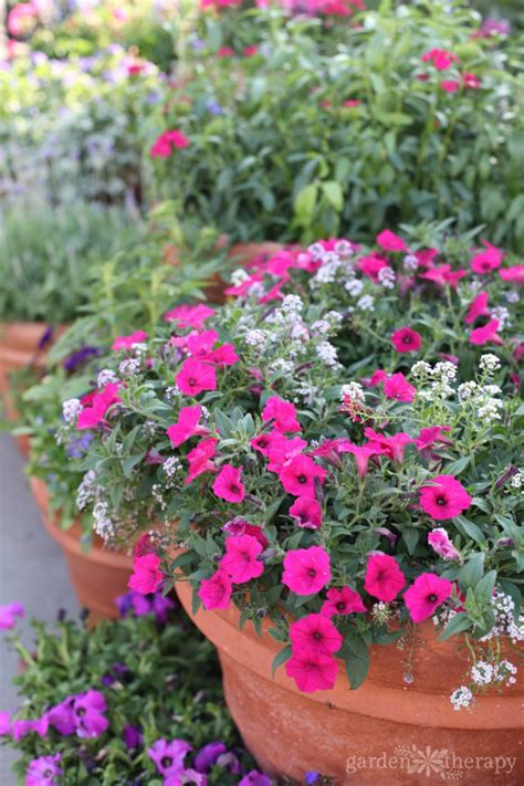 container gardens the secrets to successful container gardening