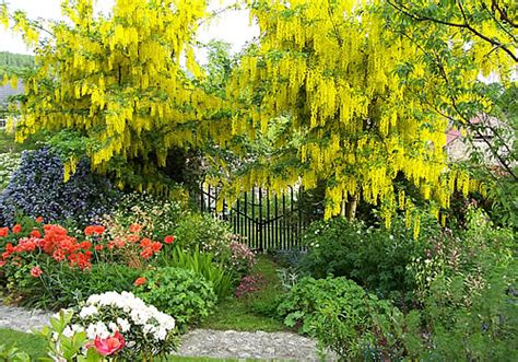Free Standing Patio Plans Cottage Garden Knockrose Gardens Dublin
