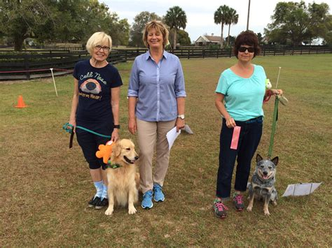 magik golden retrievers annual match rally obedience and conformation results march 2016 mid