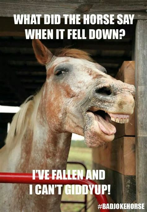 17 best images about horse funnies on pinterest story