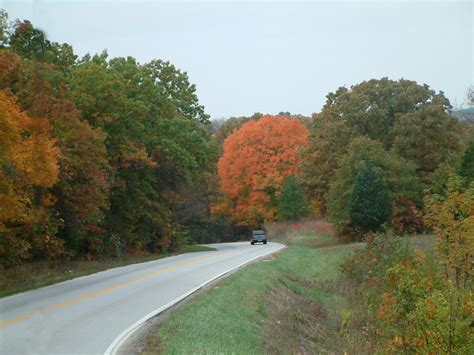 missouri maple trees steelville mo maple tree in the fall photo picture