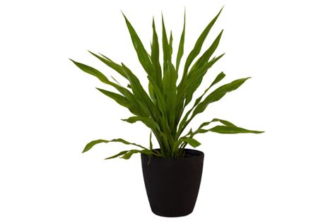 assorted foliage house plants assorted plants greenevent