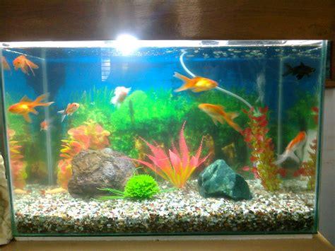 types of aquarium different types of aquarium pics different types of