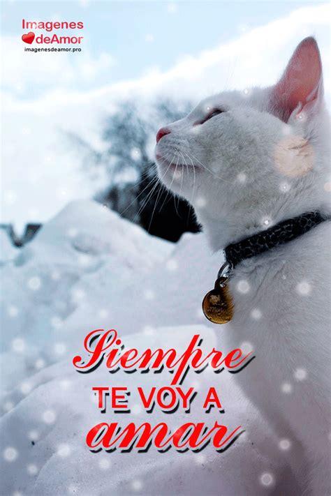 imagenes k lindas 8 im 225 genes de gatitos tiernos con lindas frases de amor
