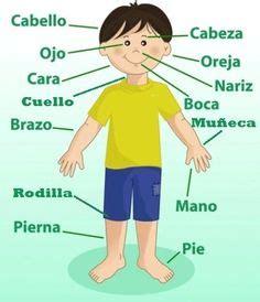 imagenes realistas del cuerpo humano how easy is spanish to learn school worksheets