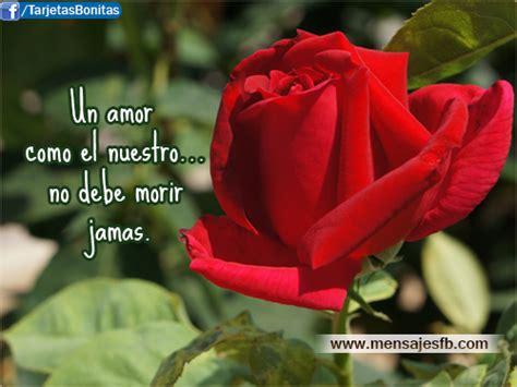 bonitas de rosas rojas con frases de amor imagenes de amor facebook rosa roja con mensajes de amor mensajes para amor