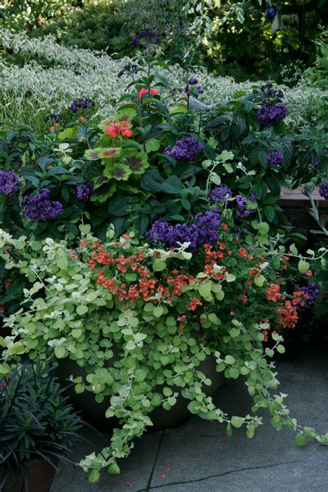 purple and silver make a glamorous combination in the 1000 images about garden color combos i love on pinterest