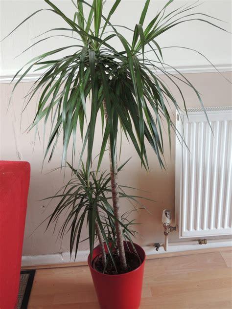 houseplants  thrive   light