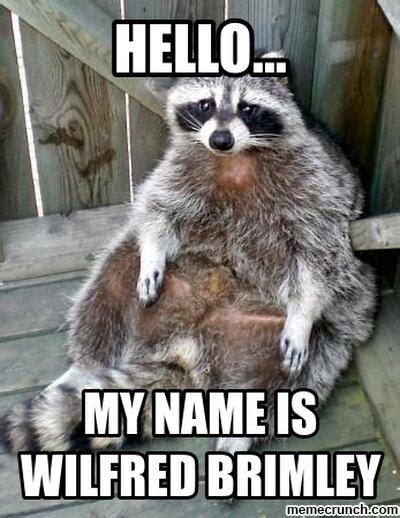 Raccoon Meme - raccoon meme