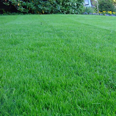 groundmaster hardwearing tough garden premium back lawn grass seed various sizes ebay