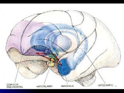 imagenes mentales involuntarias inteligencia neuroemocional