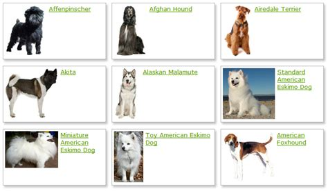 all different dogs list of all breeds breeds picture