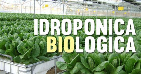 coltivazione idroponica in casa bioponica la coltivazione indoor idroponica biologica