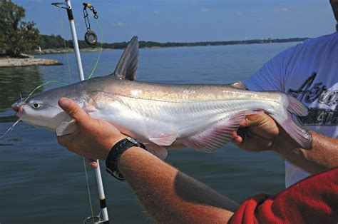 g3 boats recalls because catfish is his business williams finds success on