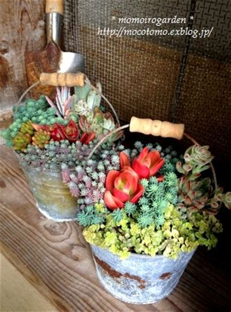 succulent containers for sale 78 images about endless succulent ideas on pinterest agaves potted succulents and concrete