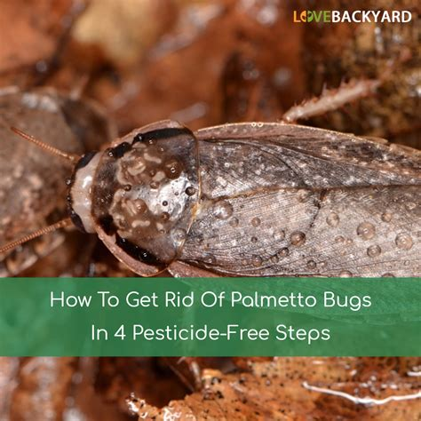 get rid of bugs in backyard how to get rid of palmetto bugs in 4 pesticide free steps