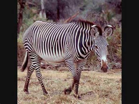 imagenes de animales raros animales extra 241 os by klaxlox youtube