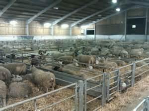 Sheep Sheds Ireland by Image Gallery Sheds