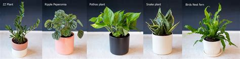 easy to take care of indoor plants tools for a healthy environment energy saving tools