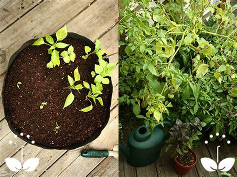 garden smart container gardening smart pots for smart container gardening mrbrownthumb