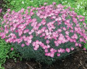 opinions on perennial plant