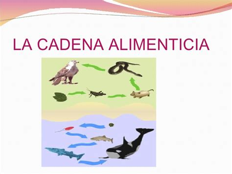 cadena alimenticia hora de aventura cancion cadena alimenticia newhairstylesformen2014
