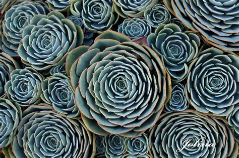 perfect pattern in nature 20 photos of geometrical plants for symmetry lovers