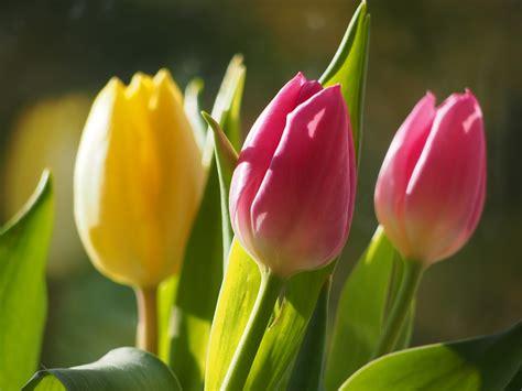 Fleurs De Printemps by Fleurs Printemps