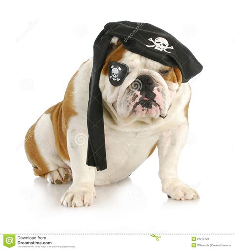 pirate puppy pirate stock photos image 27270723