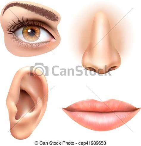 imagenes ojos nariz boca orejas clipart vectorial de conjunto ojo iconos labios nariz