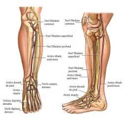 douleur aux nerfs du pied n 233 vrome neuropathie diab 233 tique