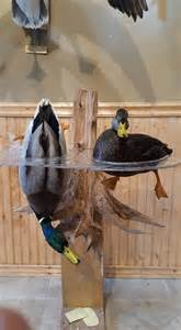 mallard duck home decor best 25 duck hunting decor ideas on pinterest hunting signs duck hunter gifts and hunting