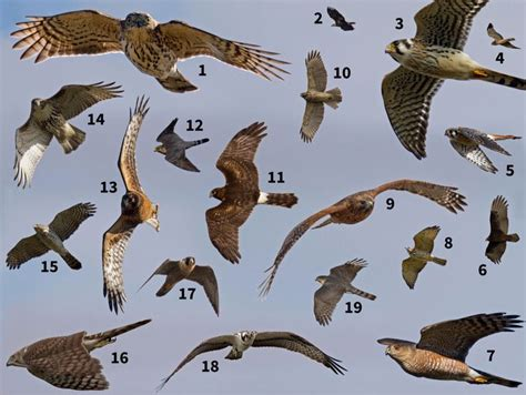 backyard bird watch 7 mejores im 225 genes de le yin et le yang en pinterest