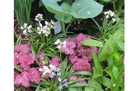 piante da terrazzo esposto a nord esposizione a nord quali piante usare casafacile