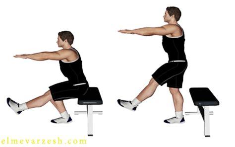 single leg squat on bench علم ورزش ۱۰ تمرین برای تقویت عضلات خارج ران