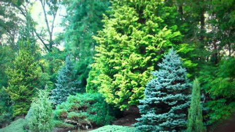 trees for sale cheap evergreen trees for sale cheap 2 89 from tn wholesale
