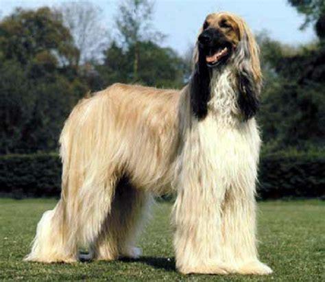 breeds alphabetical breeds alphabetical list