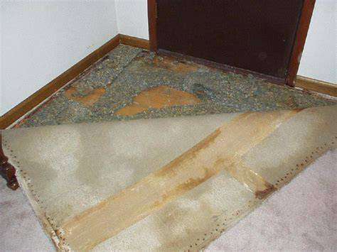 cat urine on rug cat urine in carpet pad carpet the honoroak