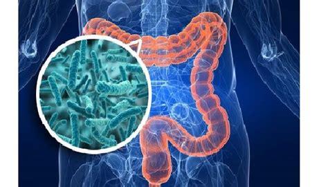 alimenti probiotici e prebiotici probiotici e prebiotici qual 232 la differenza ischia