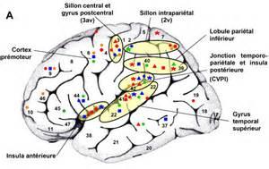 anatomie fonctionnelle de l oreille combattons