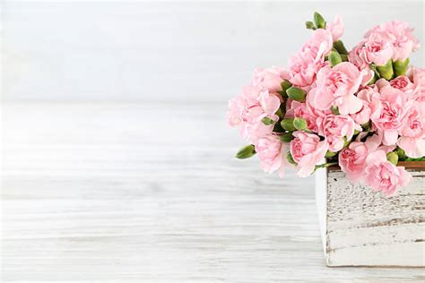 flower free flowers photos free flowers stock photos royalty free flowers pictures images and stock photos