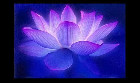 lotus water enlightenment or meditation and universe image gallery light blue lotus flower