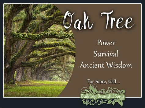 Meaning Of Trees | oak tree meaning symbolism tree symbolism meanings
