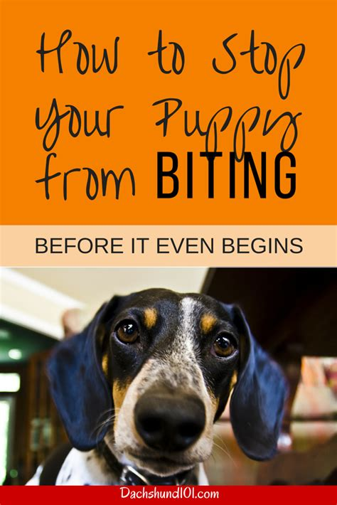 how to get a puppy from biting how to stop a puppy from biting and mouthing