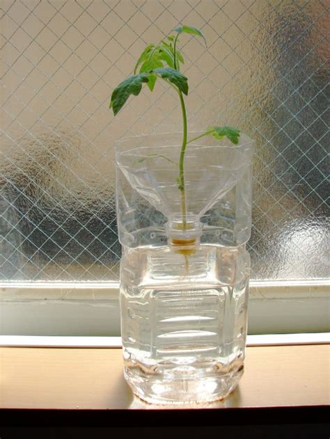 images  hydroponic gardening  pinterest